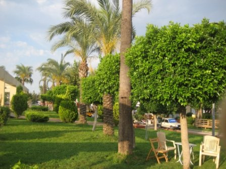 Пальми в Кемері